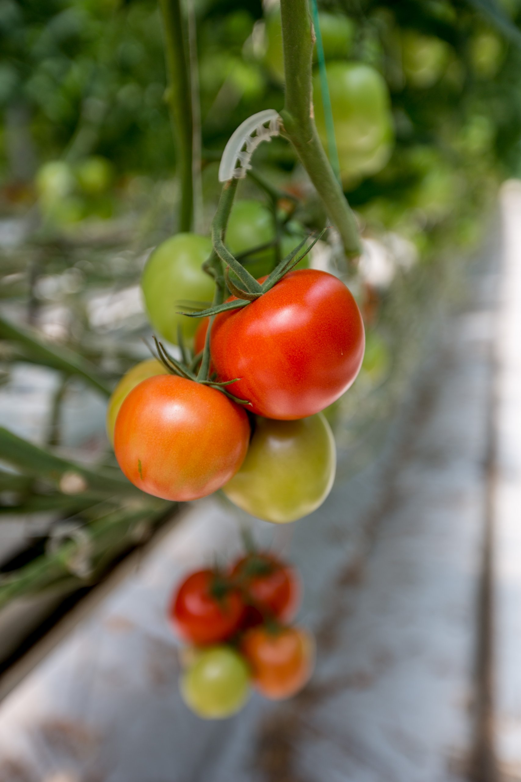 Sustainability, Food Security, and Farm Safety